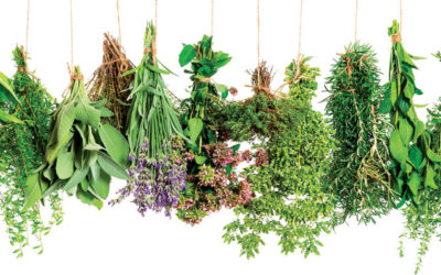 Herbs of Greece