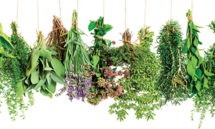 Herbs of Greece