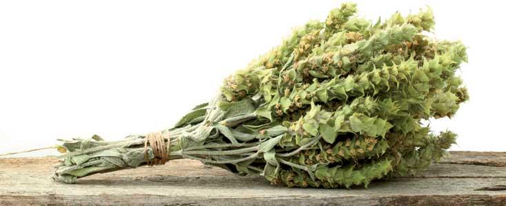 herbs-ironwort, mountain tea