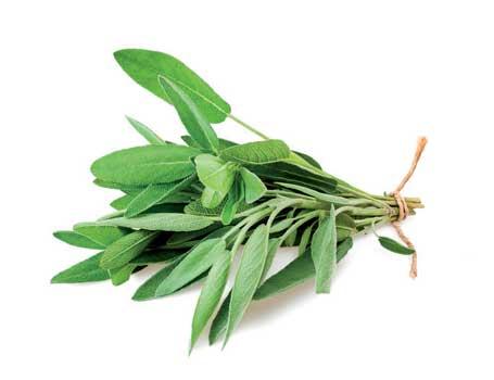 Greek herbs-fresh sage