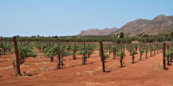 Kotsifali and Mandilaria wines